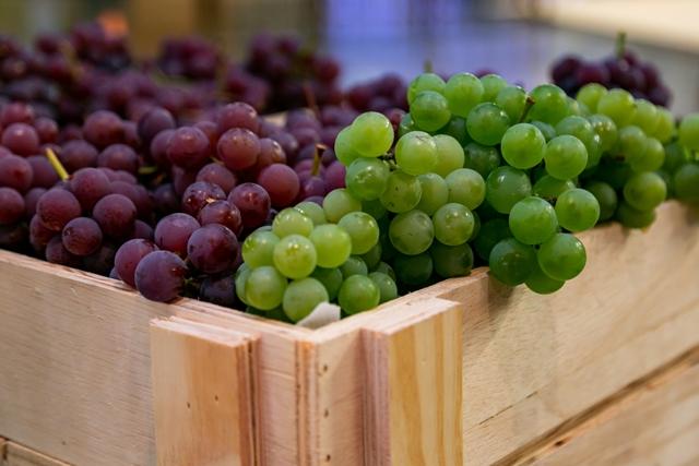Festa da Uva pagará até R$ 2 pelo quilo da fruta
